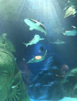 Nursery Outing to the Aquarium