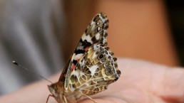 Butterfly at our Nurseries and Forest Schools near Leeds