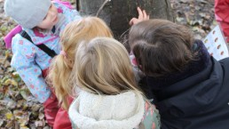 Inspecting trees at Forest School